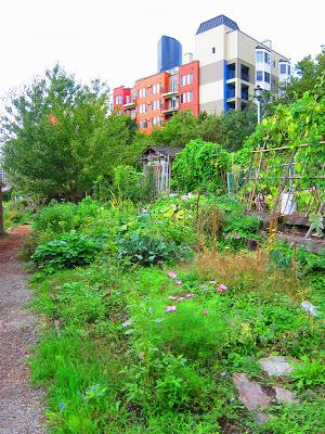 アパートに囲まれた都会型市民農園