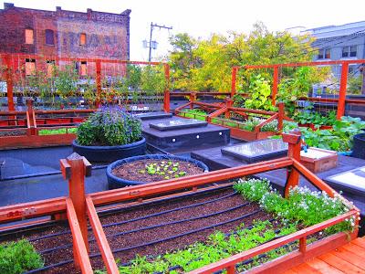 シェフが自ら収穫するフランス料理店の屋上菜園などなど、